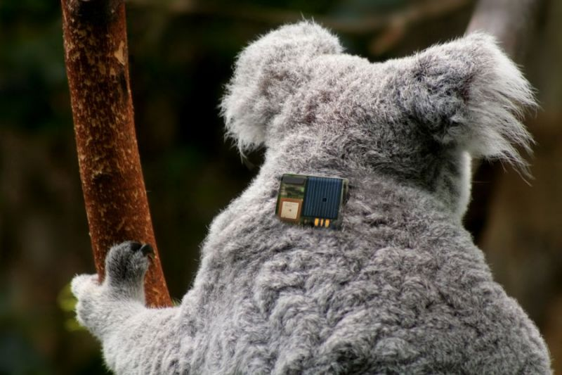 KoalaWearable